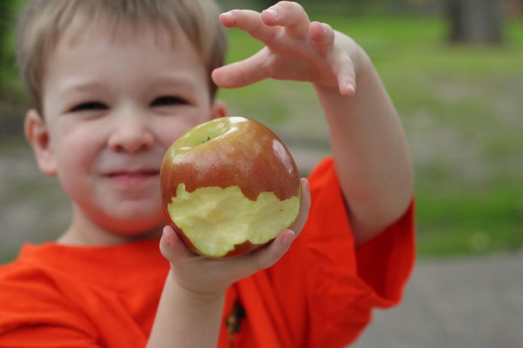 fructe-in-scoli
