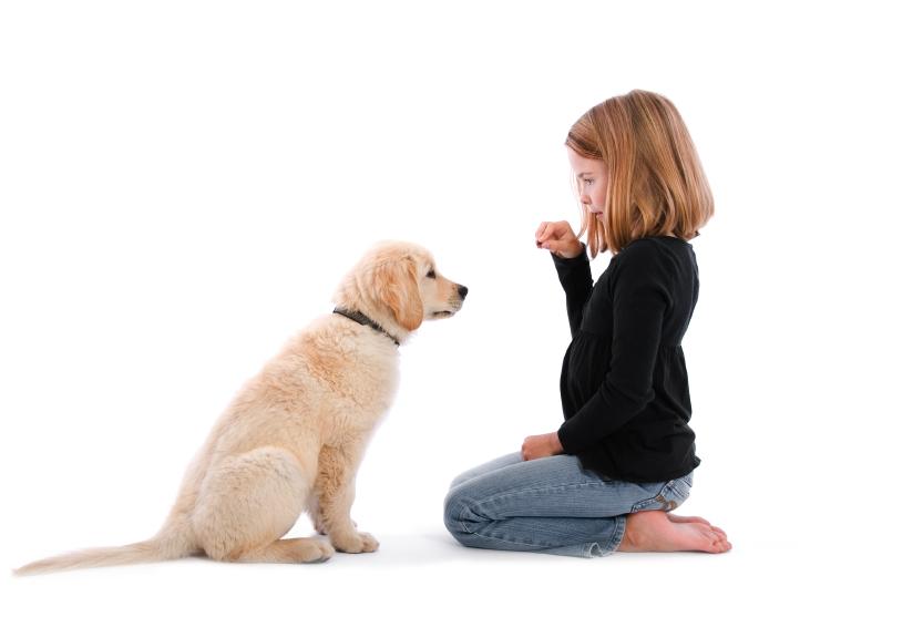 Peste 1000 de elevi din București învață cum să se poarte cu un câine