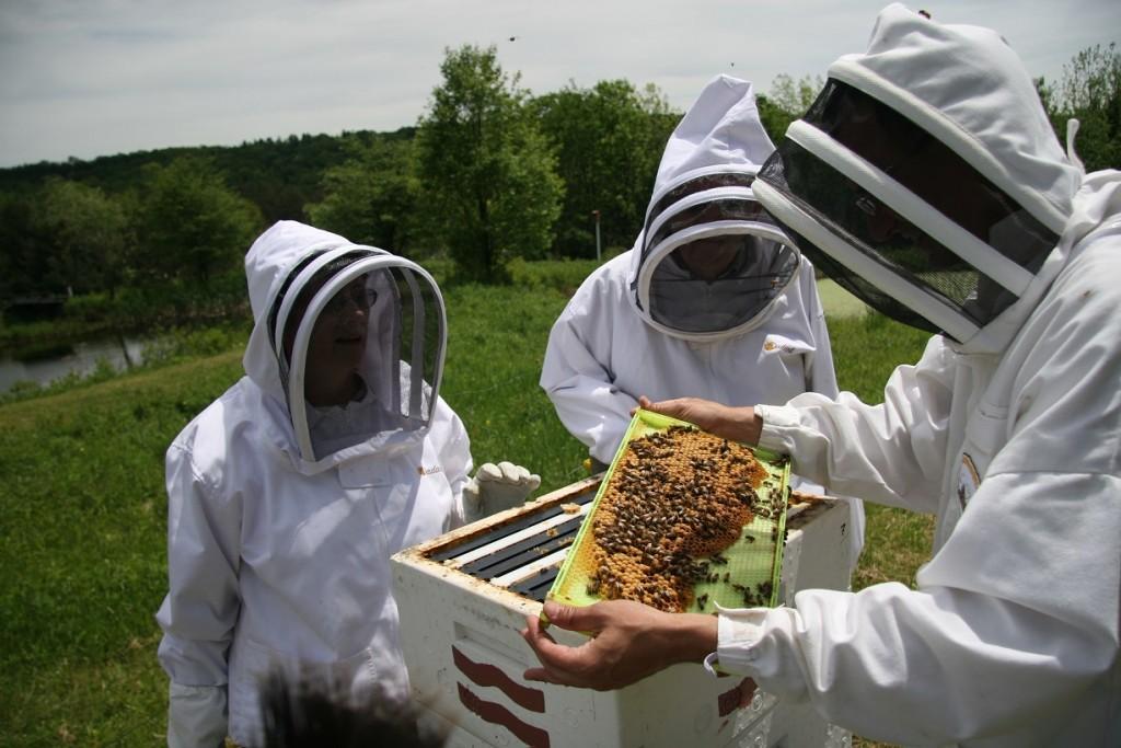 apicultori