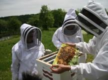 Curs gratuit de instruire pentru apicultori la Facultatea de Zootehnie