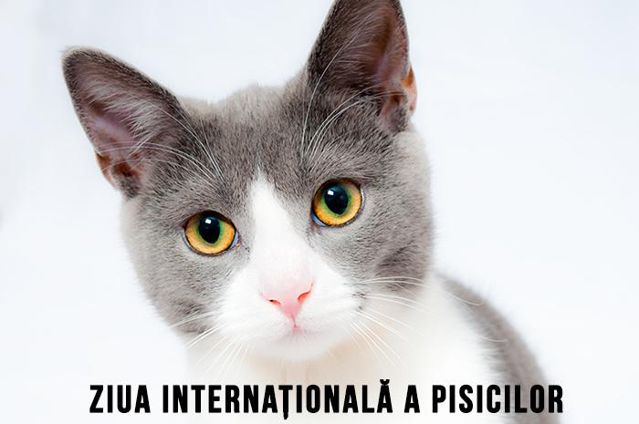 8 august, Ziua Internațională a Pisicilor