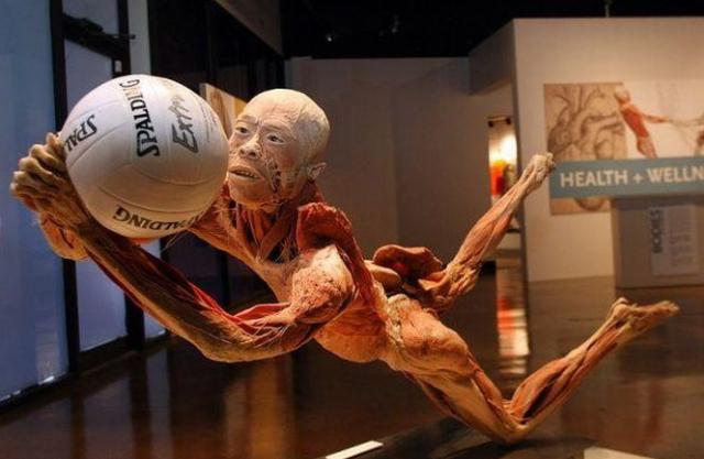 """""""The Human Body"""", lecția de anatomie cu trupuri reale de la Muzeul Antipa"""