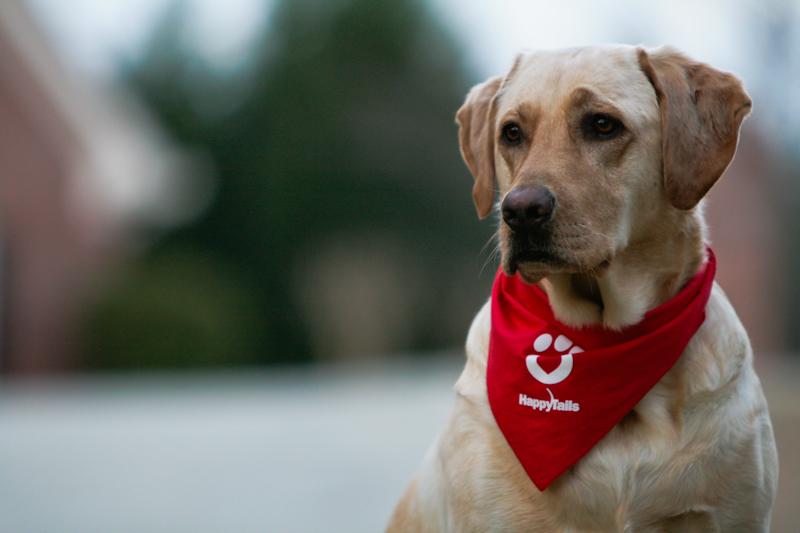 """""""Keep Calm With Dogs"""", programul prin care studenții scapă de stresul din sesiune"""