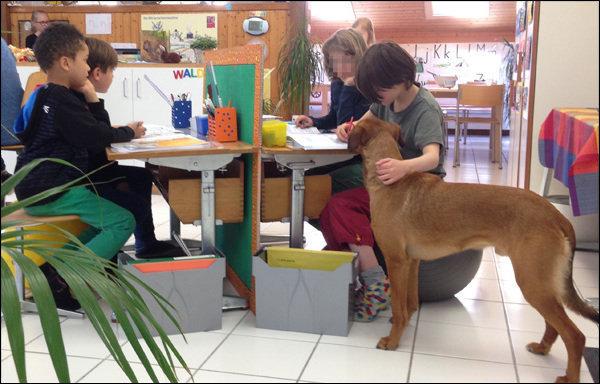 Profesorii din Elveția folosesc câini pentru a aduce liniște în clasă
