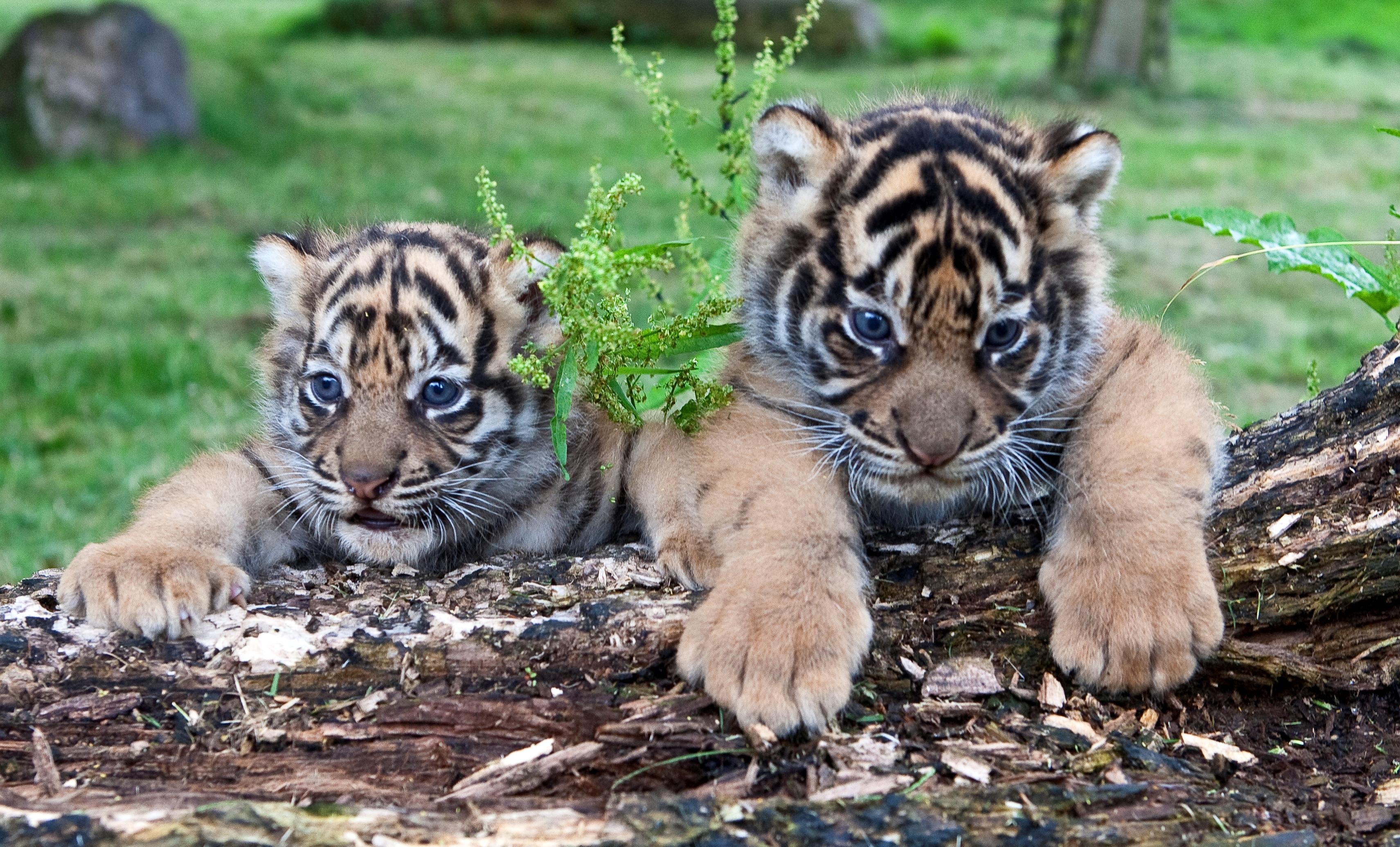 Este Ziua Internațională a Grădinilor Zoologice și Parcurilor