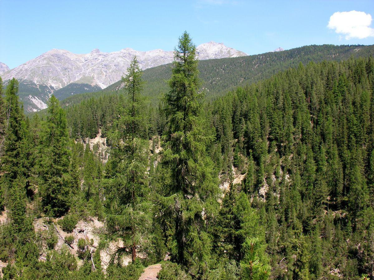 Greenpeace recrutează voluntari pentru campania de protejare a pădurilor