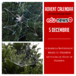 Edu-news.ro Advent Calendar – It's something elves! (5 Decembrie)