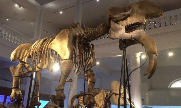 Noaptea Muzeelor la Antipa se va desfasura online